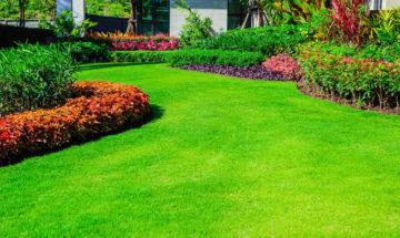 Green lawn, the front lawn for background, Garden landscape design, Design background